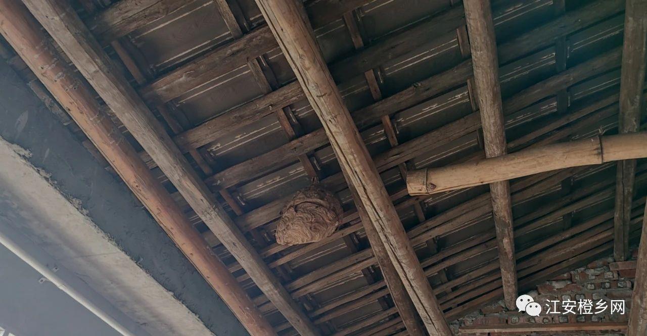 黑人!宜宾一男子取蜂窝时身亡,尸体挂在树上…